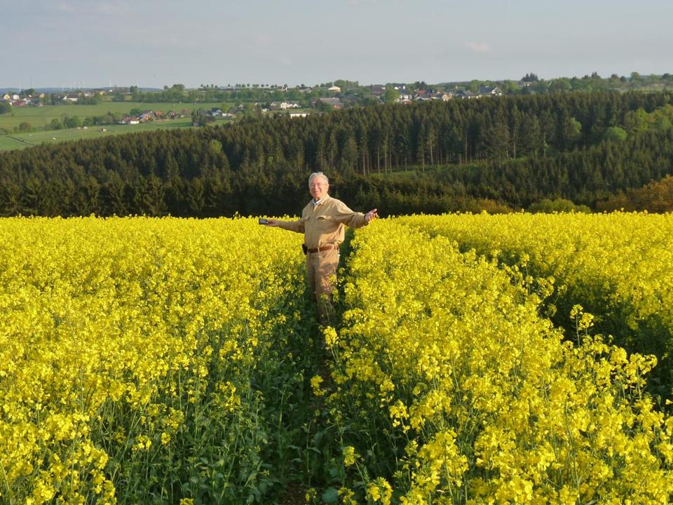 Mustard plants thrive on the Eifel's rich farmland.